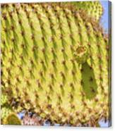 Detail Of Cactus In Galapagos Canvas Print