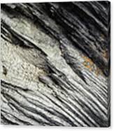 Detail Of Dry Broken Wood Canvas Print