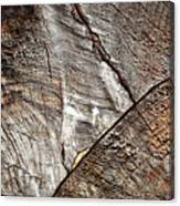Detail Of Old Wood Sawn Canvas Print