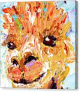 Detail Of Shorn Alpaca. Where's My Fleece? Canvas Print
