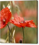 Detail Of The Corn Poppy Canvas Print