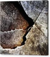 Detail Old Sawn Stump Canvas Print