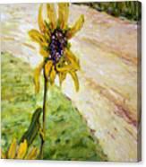 Detail Slunecnic3 Canvas Print