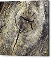 Detail Stumps On Old Wood Canvas Print
