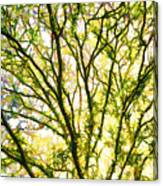 Detailed Tree Branches 1 Canvas Print