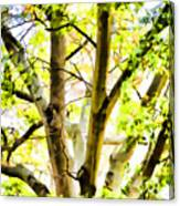 Detailed Tree Branches 2 Canvas Print