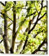 Detailed Tree Branches 3 Canvas Print