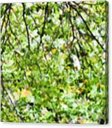 Detailed Tree Branches 4 Canvas Print