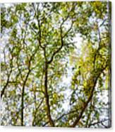 Detailed Tree Branches 5 Canvas Print