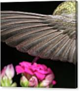 Details Of The Hummingbird Wing Canvas Print