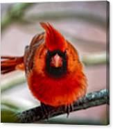 Determined Cardinal  Canvas Print