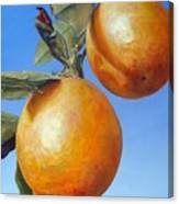 Deux Oranges Canvas Print