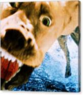 Devil Dog Underwater Canvas Print
