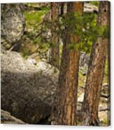 Devils Tower Trees Canvas Print