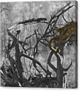 Devil's Tree Canvas Print