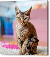 Devon Rex Purebred Domestic Cat Canvas Print