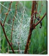 Dew Covered Spider Web Canvas Print