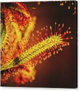 Dew Covered Tentacles Canvas Print