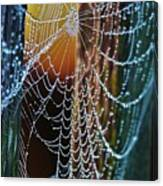 Dew Covered Web Canvas Print