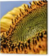 Dew Drop Bee.... Canvas Print