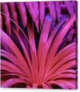 Dew Drop Pink Canvas Print