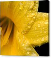 Dew Flower Canvas Print