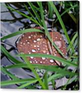 Dew It At The Creek Canvas Print