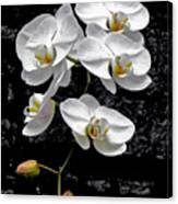 Dew-kissed Cascading Orchids Canvas Print