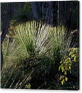 Dew On A Grass Tree Canvas Print