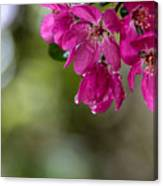 Dew On Blossoms Canvas Print