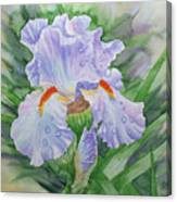 Dew On Light Blue Iris. Canvas Print