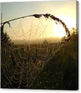 Dew On Spider Web At Sunrise Canvas Print