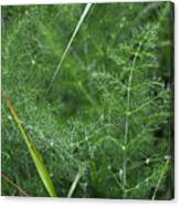 Dew On The Ferns Canvas Print
