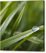 Dewy Drop On The Grass Canvas Print