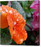 Dewy Pansy 2 - Side View Canvas Print