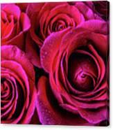 Dewy Rose Bouquet Canvas Print