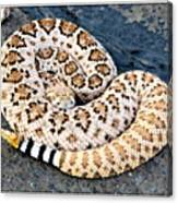 Diamondback Coils Canvas Print
