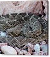 Diamondback Rattlesnake 062414a Canvas Print