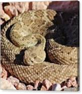 Diamondback Rattlesnake 062414f Canvas Print