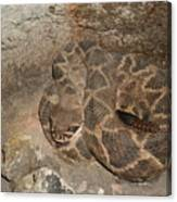 Diamondback Rattlesnake Canvas Print