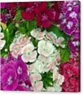 Dianthus Group  Canvas Print
