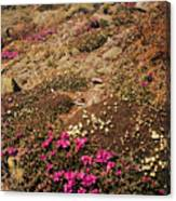 Diapensia And Lapland Rosebay Canvas Print