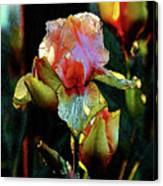 Digital Painting Vibrant Iris 6764 Dp_2 Canvas Print