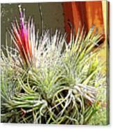 Digital Plant Canvas Print
