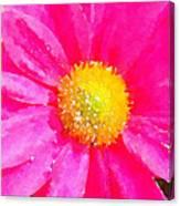 Digital Watercolour Of A Pink Daisy Pollen Flower Canvas Print