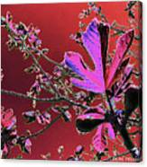 Figtree Leaves 3 Canvas Print