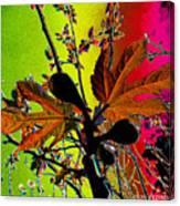 Figtree Leaves 4 Canvas Print
