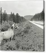 Dilemma On Highway #1, Chickaloon, Alaska Canvas Print