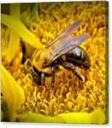 Diligent Pollinating Work Canvas Print
