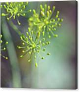 Dill Abstract On Mint Green And Plum Canvas Print